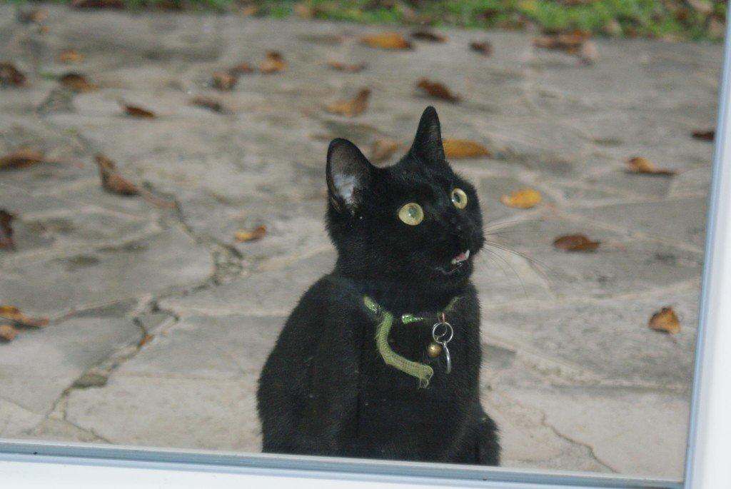Le chat  de ma voisine