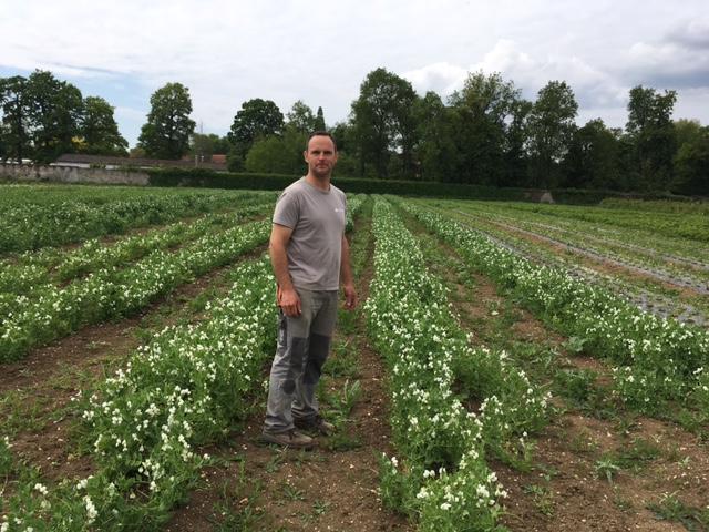 La libre cueillette est ouverte à la ferme du château de Chevigny